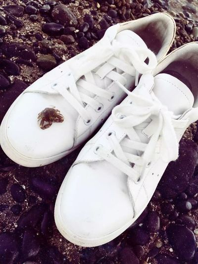 One Person A Pair Of White Shoes A Lovely Little Crab