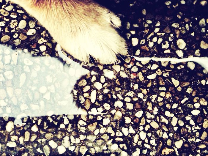 IPhoneography Enjoying Life Dog Paw. Water_collection