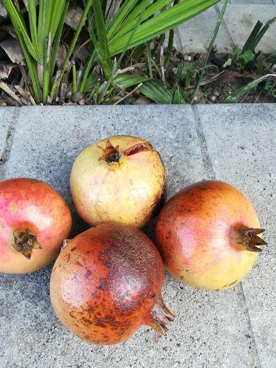 Rotting Fruit