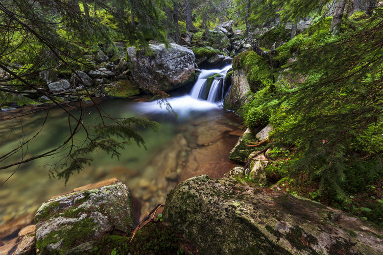 Beauty In Nature Blurred Motion Environment Flowing Flowing Water Forest Land Long Exposure Moss Motion Nature No People Outdoors Plant Power In Nature Rainforest Rock Rock - Object Scenics - Nature Solid Stream - Flowing Water Tree Water Waterfall