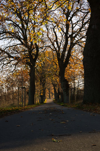 Tree Plant The Way Forward Direction Autumn Change Tree Trunk Trunk Nature Road Diminishing Perspective Growth No People Tranquility Beauty In Nature Footpath Transportation Day Leaf Tranquil Scene Outdoors Treelined Fall