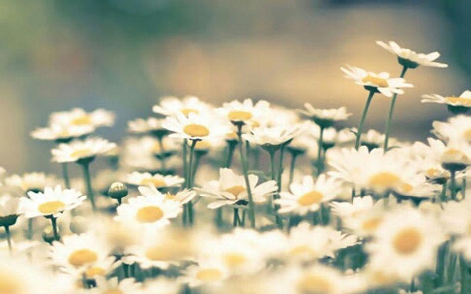 Flowers,Plants & Garden We Heart It 🌷 Flowers 🌹 Flower Photography