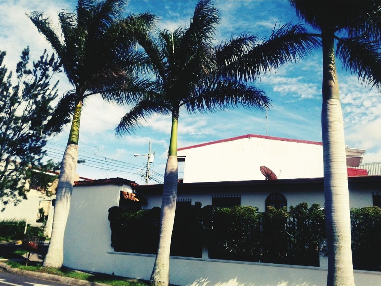 tree, built structure, palm tree, architecture, building exterior, sky, day, outdoors, no people, tree trunk, low angle view, nature, growth, beauty in nature
