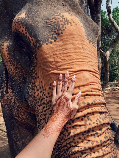 Cropped hand of woman touching elephant