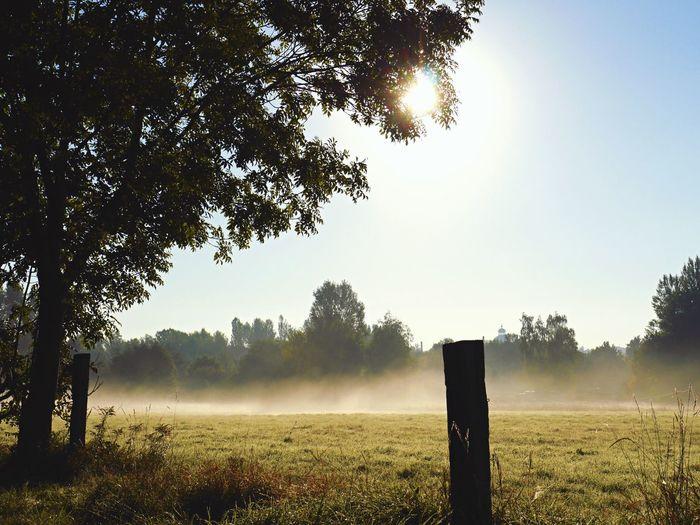 With Big Steps To Autumne🍃🍂 September morning fog Eye4photography  Tadaa Community Eyem Best Shots EyeEm Masterclass The Magic Mission