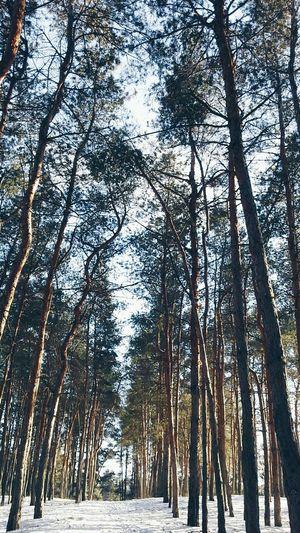 Vscocam VSCO Tree Vscocamera Vscosky Forest Trees Winter