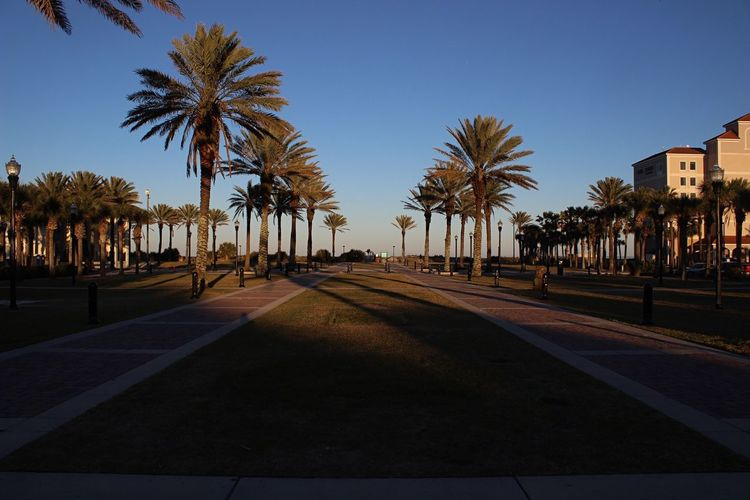 Somewhere near the pier. Palm Tree Tree Date Palm Tree Clear Sky Street Outdoors Road No People Day Nature Sky