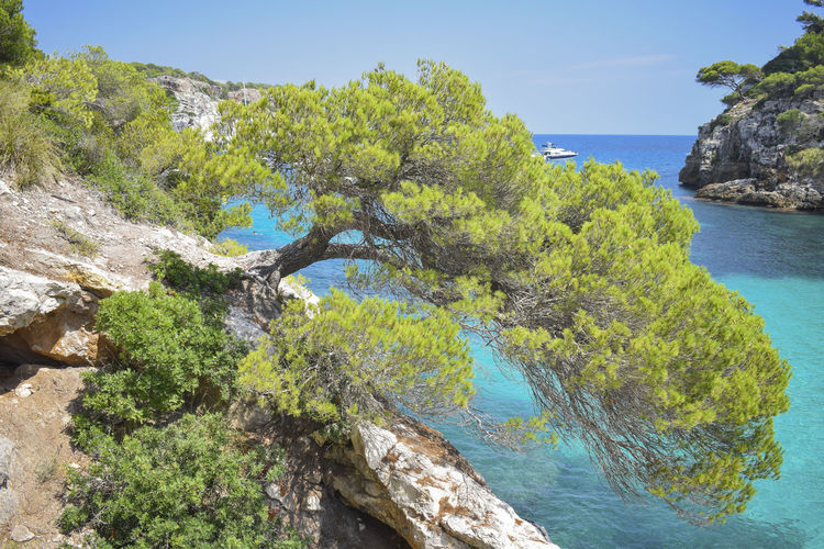 Holiday Pine Wonderful Background Beauty In Nature Calendar Calendar Pic✌ High Angle View Horizon Over Water Idyllic Menorca Nature No People Paradise Rock - Object Scenics Sea Sky Summer Tranquil Scene Tranquility Travel Destinations Tree Turqoise Water