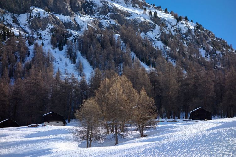 Snow Cold Temperature Winter Tree Scenics - Nature Tranquil Scene Beauty In Nature Mountain Nature Tranquility Day Environment Landscape No People Covering Non-urban Scene Sky Outdoors Snowcapped Mountain