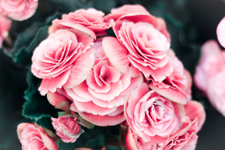 Flowers,Plants & Garden Peonies Pink Beauty In Nature Bunch Of Flowers Close-up Day Flower Flower Head Flowering Plant Flowers Fragility Freshness Growth Inflorescence Nature Outdoors Peony  Peony Flower People Petal Pink Color Pink Flower Plant Vulnerability