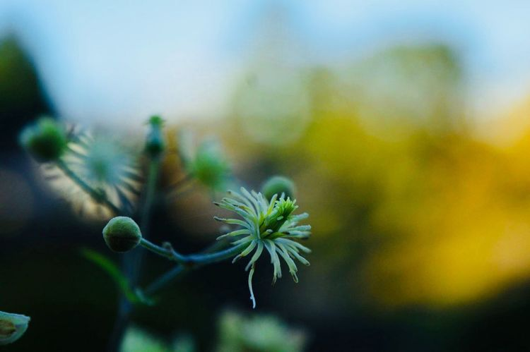 No filter needed🌿 Focus On Foreground No People Close-up Nature Plant Growth Day Outdoors Fragility Beauty In Nature Flower Freshness Edinburgh Nature Details Close Up Nikon Moments Green Perspectives On Nature EyeEmNewHere