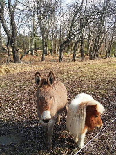 Relaxing Enjoying Life Tree Nature Donkey Mini Horse Horse Love Spring Has Arrived