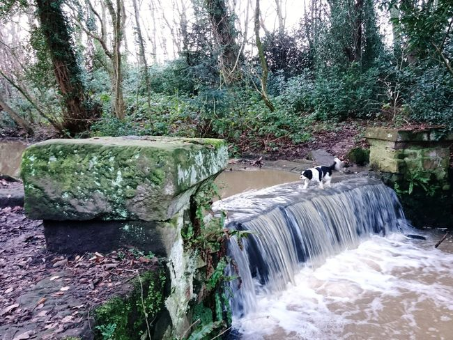 Waterfall Arrowe Park Arrowe Brook Water Tree Day Nature Outdoors No People River Forest Motion Animal Themes Waterfall Beauty In Nature Mammal