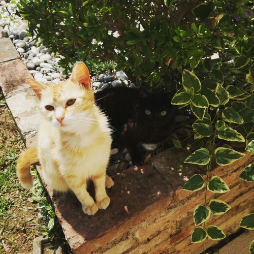 Domestic Cat Pets Domestic Animals Animal Themes Feline Plant Mammal No People Day Outdoors Nature Close-up 2017 Picoftheday Sunny Day May