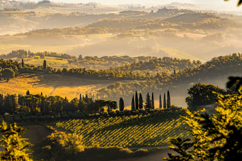 Agriculture Beauty In Nature Beauty In Nature Cypresses Hills Landscape Mountain Nature No People Rural Scene Scenics Sunlight Sunset Tranquil Scene Tranquility Travel Destinations Tuscany Tuscany Countryside Tuscany Italy Tuscany Landscape Lost In The Landscape Been There.