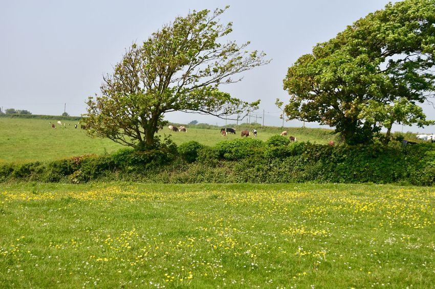 Taking Photos Greenery Windswept Tree FarmAnimal Wildflowers Nikon D5500
