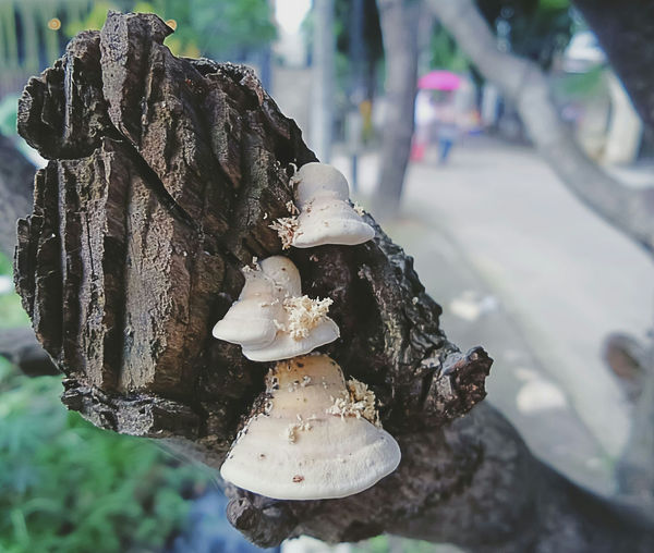 Close-up of fungus