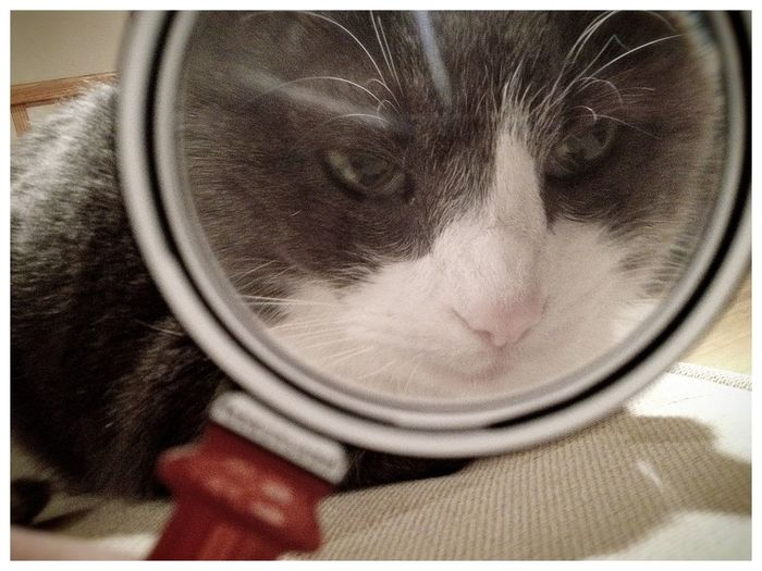 Cat Sneezy