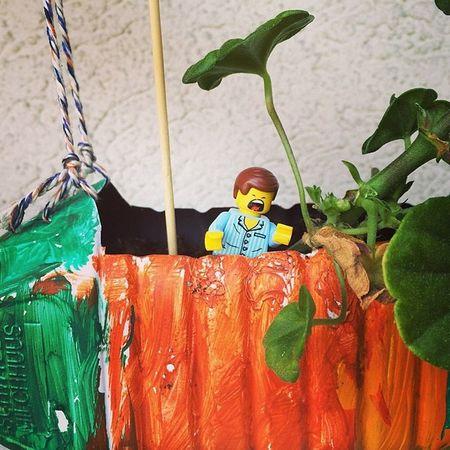 Ich bin ein Star holt mich hier raus. Ach nee, das ist ein anderes Format #emmet #gadget #vsco #vscogood #vscocam #lego #legomovie #switzerland #swiss #draussen #outdoor #pflanzen #topfpflanzen #geranien Emmet Legomovie Flower Geranien Draußen Topfpflanzen LEGO Star Blumen Pflanzen Switzerland Swiss Outdoor Vscocam Gadget VSCO Ibes Vscogood