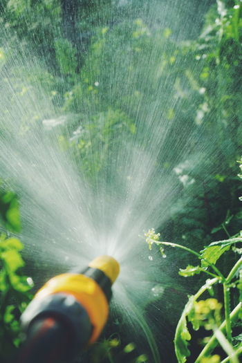 Close-Up Of Garden Hose Spraying Water On Plants