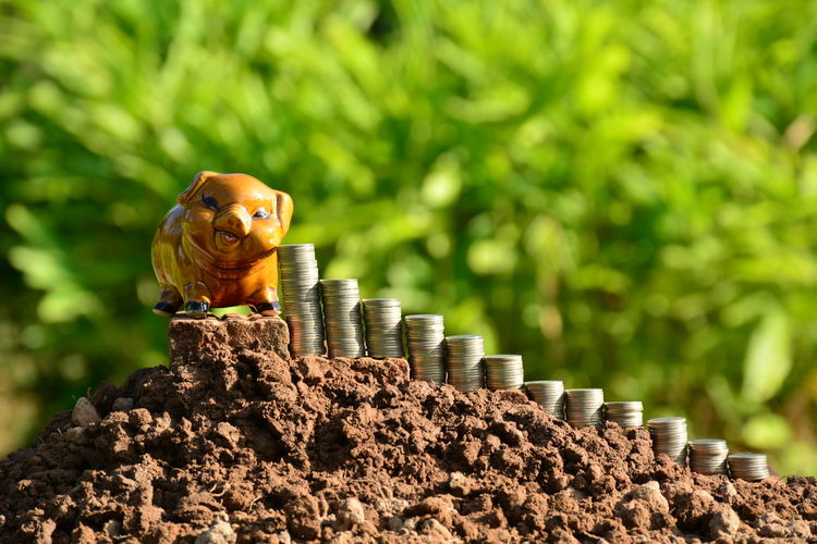 Coins By Piggy Bank Against Trees