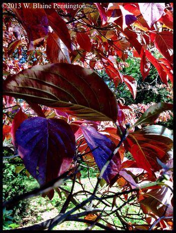 Fall leaves Fall Leaves Autumn Trees