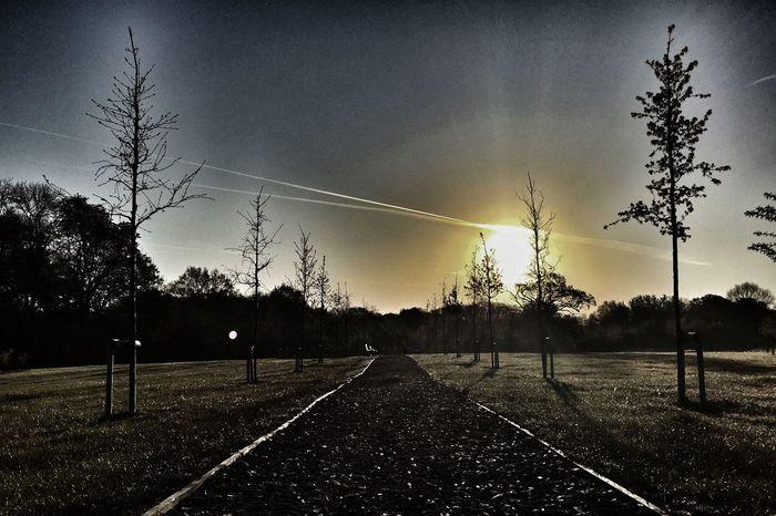 Morning walk, sun, trees, vintage