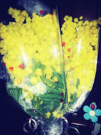 Festa Della Donna Yellow Flower Mimose From my Dad to me. ♥