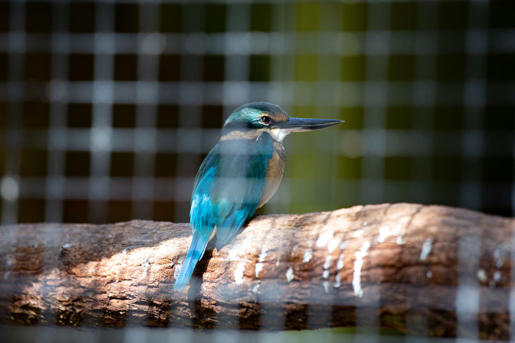 Animal Themes Vertebrate Animal Bird Animal Wildlife One Animal Animals In The Wild Perching No People Focus On Foreground Day Close-up Nature Water Beak Blue Outdoors Beauty In Nature Kingfisher Turquoise Colored Kookaburra