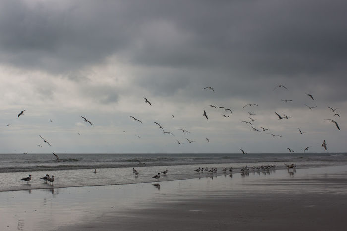 Grey day gulls Animal Wildlife Beach Cloud - Sky Flock Of Birds Flying Grey Day Horizon Over Water Jetty Park Large Group Of Animals Nature No People Seagulls Seagulls In Flight Spread Wings Stormy Sky Tranquil Scene