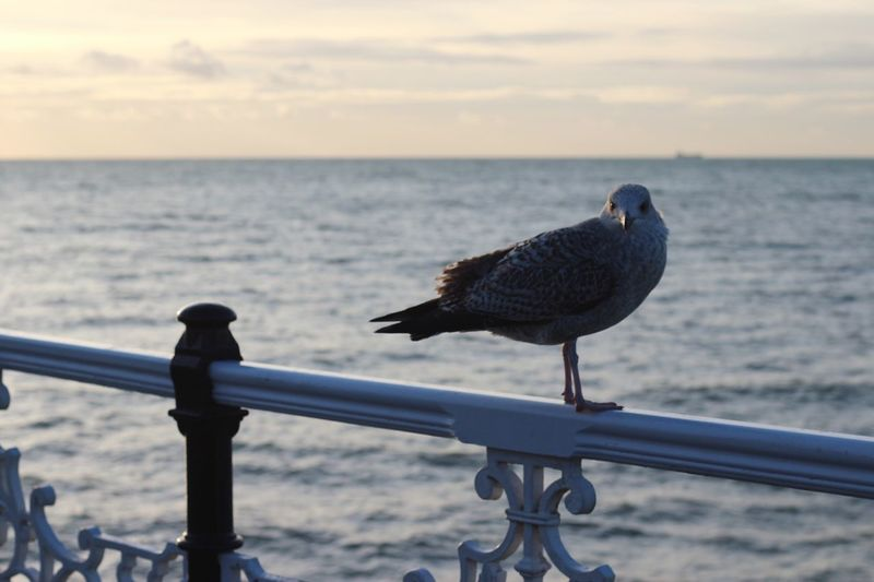 Close-up of bird perching on railing against sea