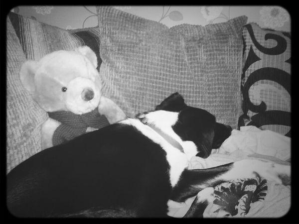 Relaxing Sleeping Dog Dogs Cute Bestfriend Bear Vinnie