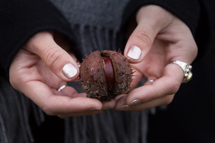 Midsection of woman holding chestnut