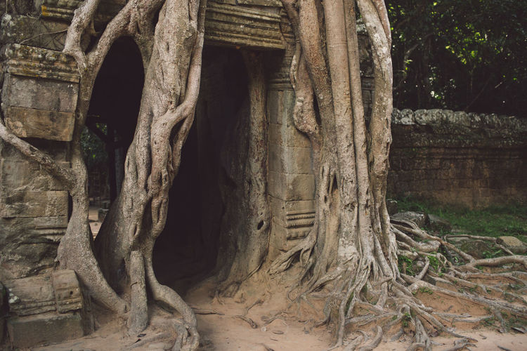 Siem Reap Cambodia Angkor Architecture Tree No People Built Structure Day History The Past Plant Nature Ancient Old Ruin Trunk Tree Trunk Building Root Old Outdoors Travel Destinations Ruined Building Exterior Ancient Civilization Architectural Column Archaeology