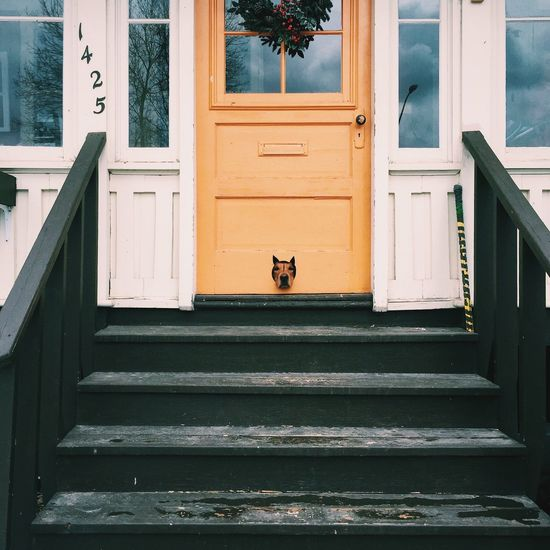 So close, yet so far... Showcase April Dog Doggydoor Frontporch Peekingout Frontsteps Low Angle View Pet Portraits