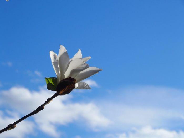 Spring Into Spring Magnolia Springtime Flowers Spring Flowers