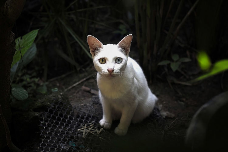 Portrait of white cat sitting on metal grate in backyard