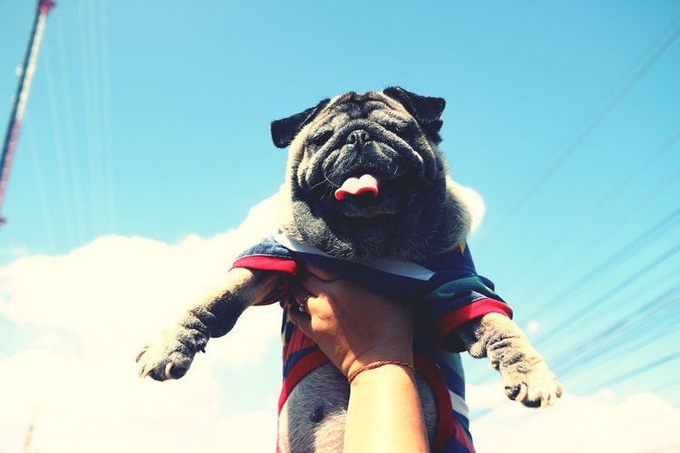 Low angle view of person holding small dog against sky