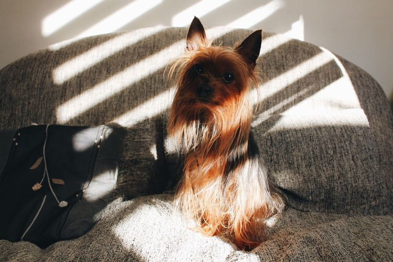 Domestic Domestic Animals Pets Mammal Animal Themes One Animal Animal Dog Sunlight Home Interior Relaxation