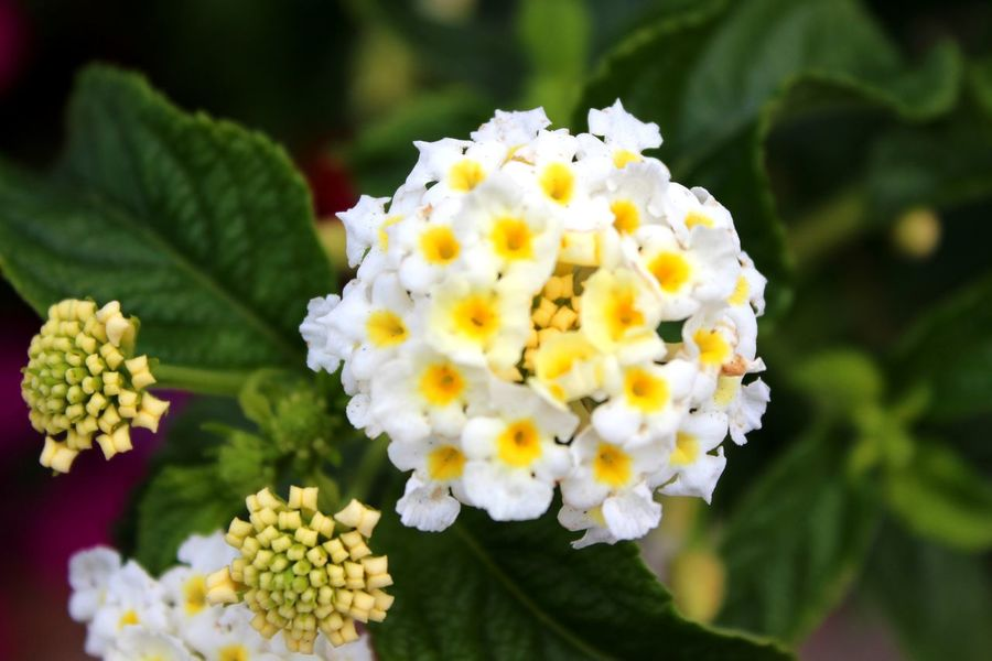 Flower Plant Fragility Nature Freshness Close-up White Flowers Symmetry In Nature
