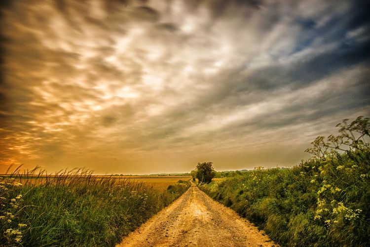 Paysage et nuages Long Exposure Longue Exposition Pose Longue Exposure Tree Flower Rural Scene Sunset Cereal Plant Agriculture Field Dramatic Sky Sky Landscape Storm Cloud vanishing point