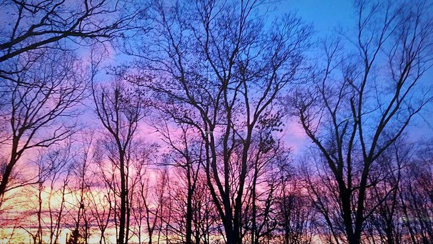 Splashes of colour Sunset Winter S Qi Frame It! Connecticut Forest Nature The Great Outdoors - 2016 EyeEm Awards Travel Novice Photography