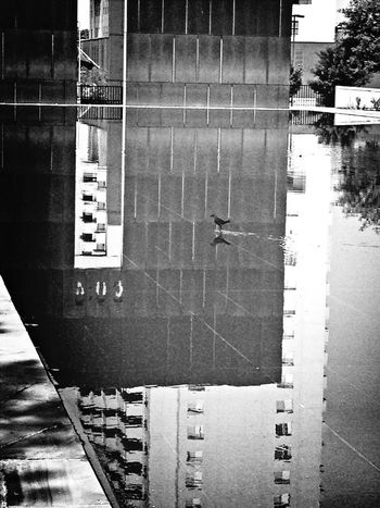 Water Reflections Bird EyeEm Best Shots - Black + White Oklahoma City Bombing Memorial