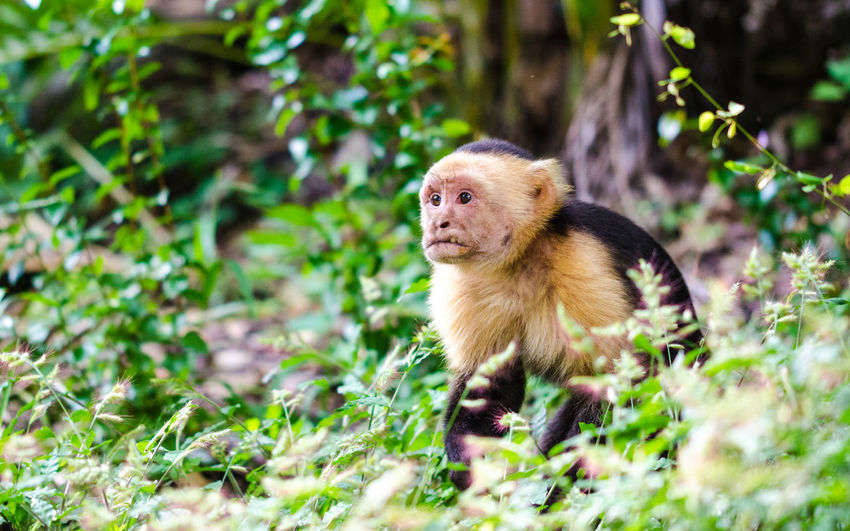 Mammal Primate Monkey Animal Wildlife No People One Animal Outdoors Day Nature Nature Photography Nature_collection Wildlife_shots Wildlife Photography Wildlife & Nature Wildlife