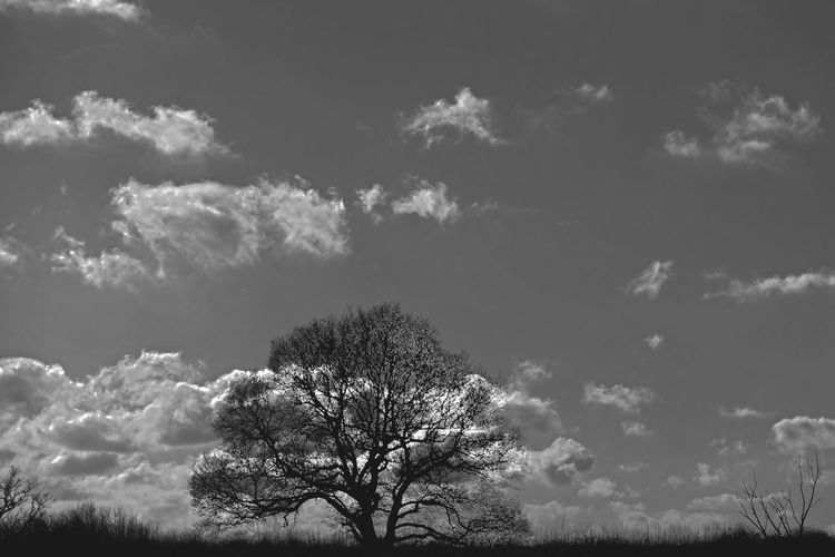 Landscape #clouds Silhouette Tree TreePorn Creative Light And Shadow Landscapes EyeEm Landscape Sky And Clouds Countryside Views Black And White Photography