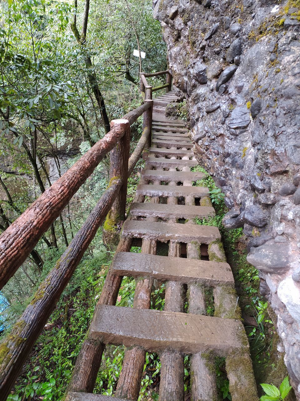 HIGH ANGLE VIEW OF WALKWAY IN FOREST