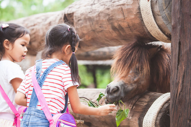 Cute asian child girl feeding a horse in the farm with happiness Asian  Farm Feeding  Fun Happy Happy People Pony Touch Adorable Animal Wildlife Child Cute Daughter Domestic Domestic Animals Enjoying Life Food Girls Horse Kid Mammal Outdoors Pets Sister Vegetable