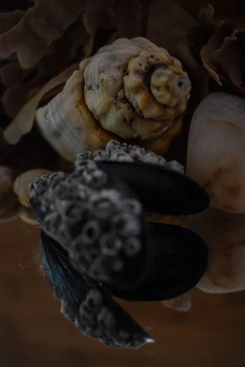 shells Malephotographerofthemonth Nature Photography Macro Photography Micro Nature Closeup Seascape Shell Photography UnderSea Sea Life Close-up Animal Shell Crustacean Seashell Shell