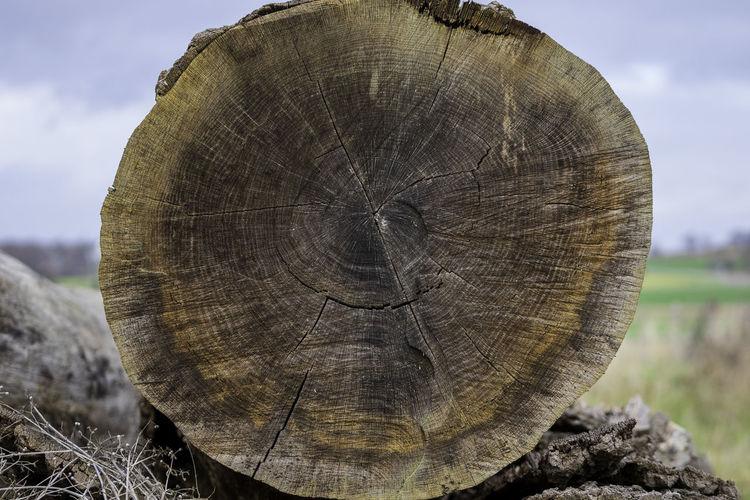 Close-up of tree stump on field