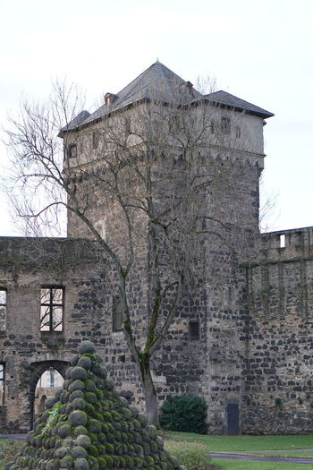 Architecture Building Exterior Built Structure Tree History Plant Sky The Past Building Nature No People Bare Tree Day Wall Old Castle Outdoors Stone Wall Window Low Angle View